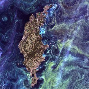 'Van Gogh desde el espacio', 13 de julio 2005. NASA Goddard Space Flight Center. Esta foto muestra las congregaciones masivas de fitoplancton alrededor de Gotland, una isla sueca en el mar Báltico. Los fitoplancton son plantas marinas microscópicas que forman el primer eslabón de casi todas las cadenas alimentarias del océano. Las explosiones de fitoplancton, se producen cuando las corrientes profundas llevan los nutrientes a la superficie iluminada por el Sol, alimentando el crecimiento y la reproducción de estas pequeñas plantas, lo que hace de esta una explosión de vida.