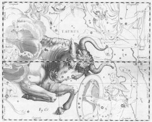 Constelación de Tauro, Uranografíia de Johannes Hevelius, 1690